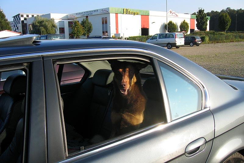 """tierischer Beifahrer """"Paulina"""" thronte stolz auf dem Rücksitz des BMW 740d (E38) von """"Zebresel"""""""