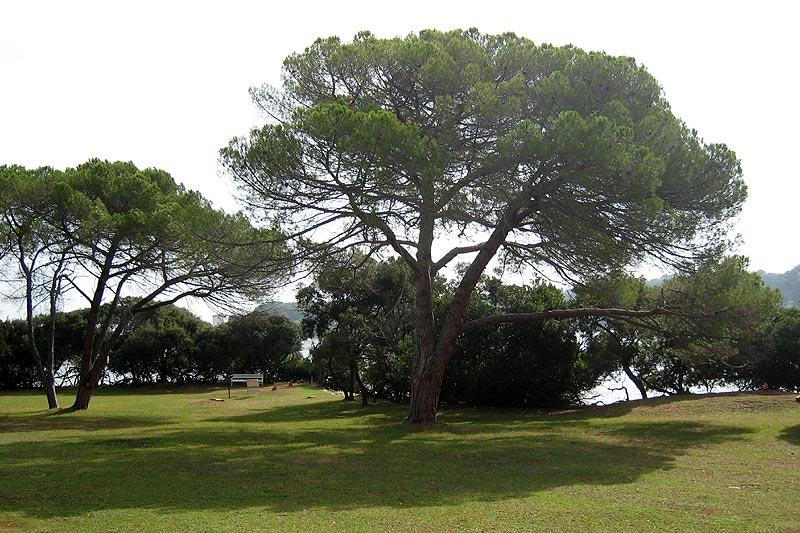 Insel Brijuni