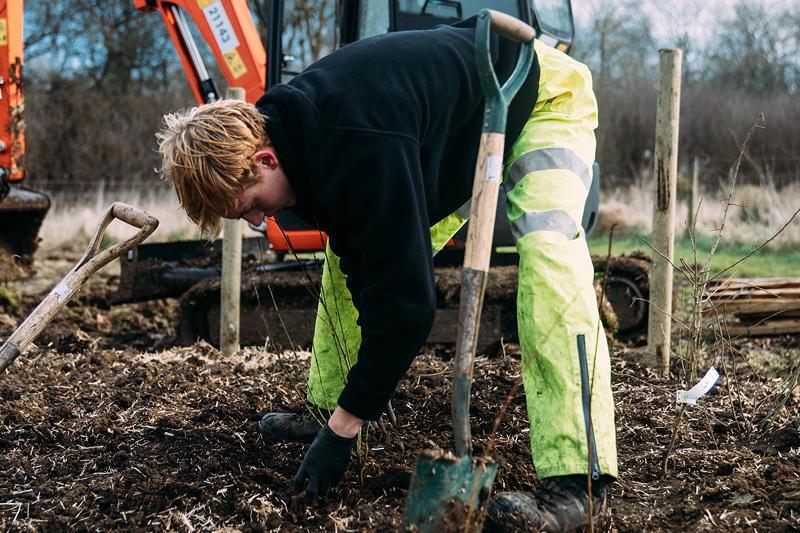 MINI boost for Tiny Forest initiative, flanzung von Freiwilligen am Waldstandort Swindon